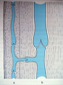 Venensystem